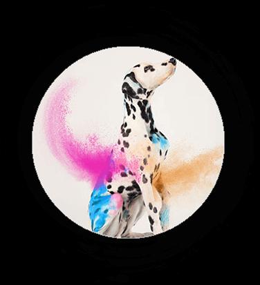 Dalmatiner von Orcamou - Model-Referenzen