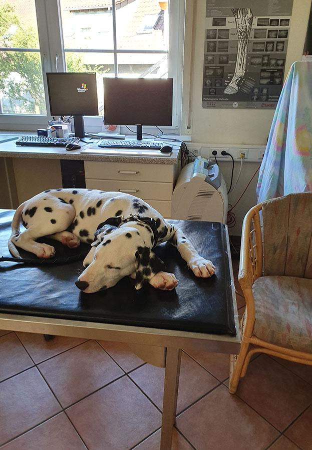 Relaxing beim Tierarzt