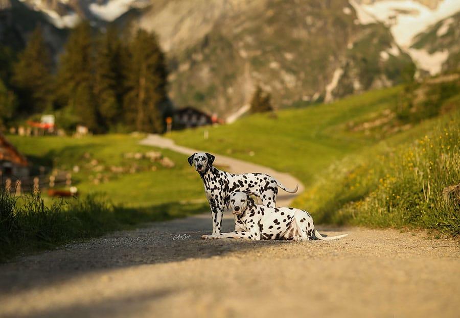 Fotoshooting in den Schweizer Bergen