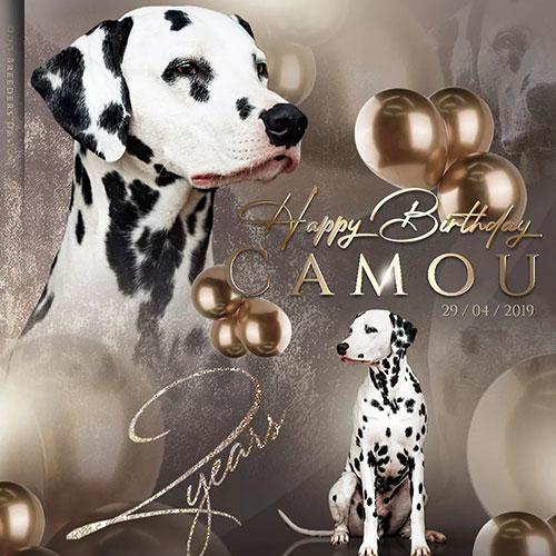 Happy Birthday Camou