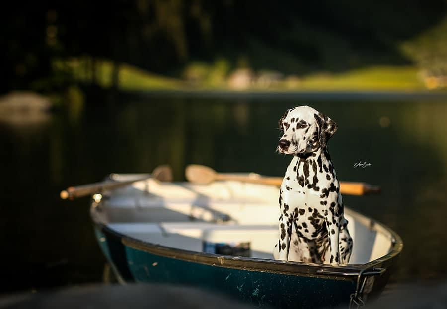 Photoshooting by Anna Szabó