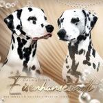 Wurfankündigung mit Felina-Lana vom Gestüt Wunsch & Camou